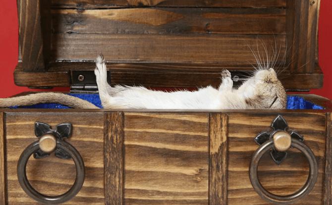 ハムスターにとって最適な睡眠時間や睡眠環境は?