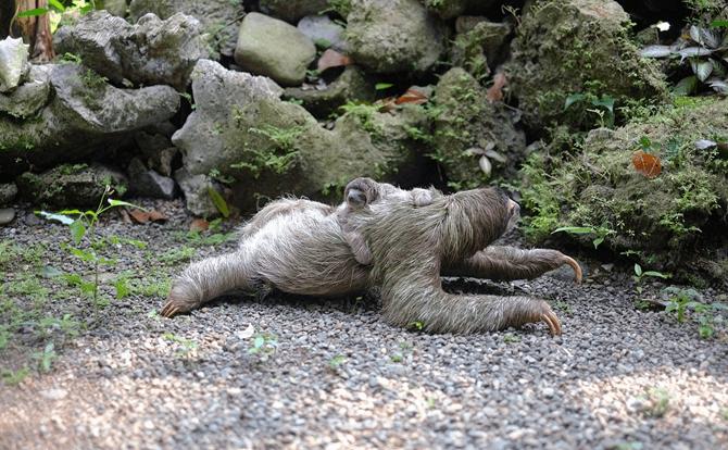 コアラ 睡眠時間4