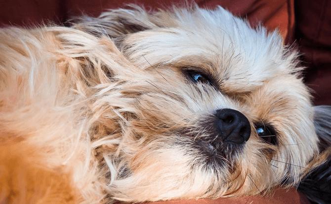 寝不足になると基礎体温が不安定になる