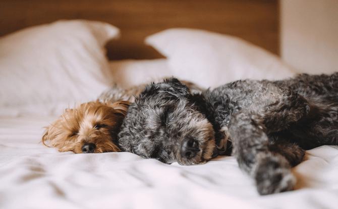 最適な睡眠姿勢とは