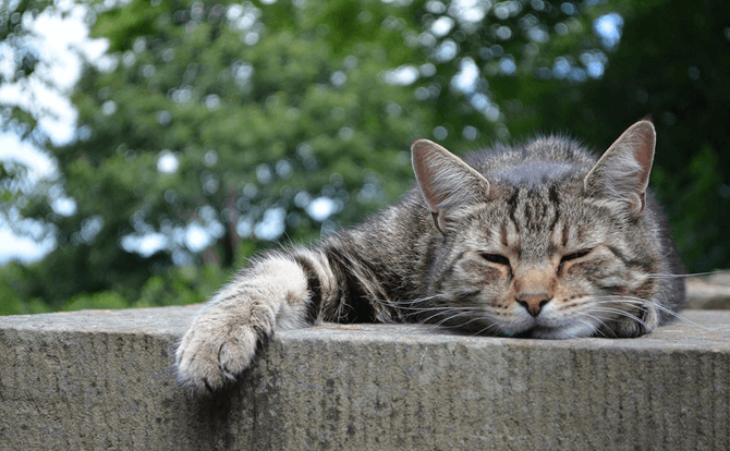 血行改善は不眠解消にも効果がある