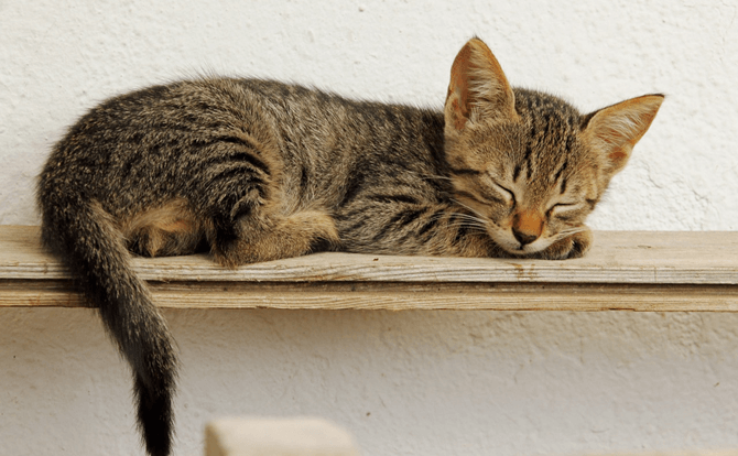 飲み物も睡眠の質を左右する